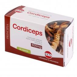 Cordiceps KOS erboristeria