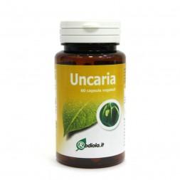 Uncaria_E.S_60_tav.