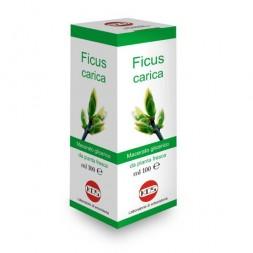 KOS - Ficus carica 100ml