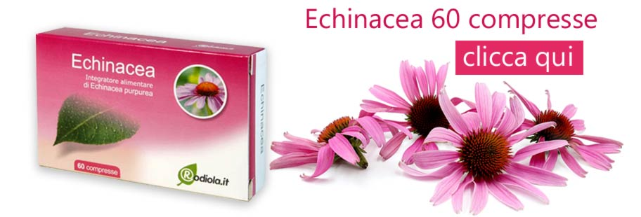 echinacea proprietà antibiotico