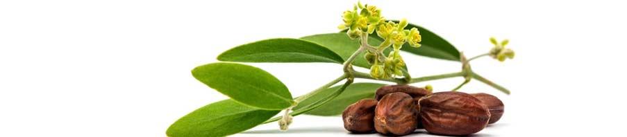 proprietà dell'olio di jojoba